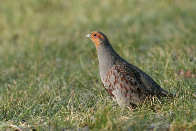 Actieplan Akker- en Weidevogels