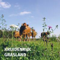 Nieuwe brochure boordevol informatie over kruidenrijk grasland