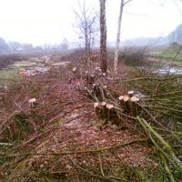 Achterhoekse houtsnippers verduurzamen productie veevoer ForFarmers