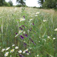 Bodemcondities voor kruidenrijk grasland