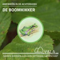 Informatieboekje Boomkikker