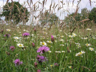 Kruidenrijk grasland informatiebijeenkomsten