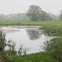 VALA start 'poelenproject' voor zeldzame amfibieën