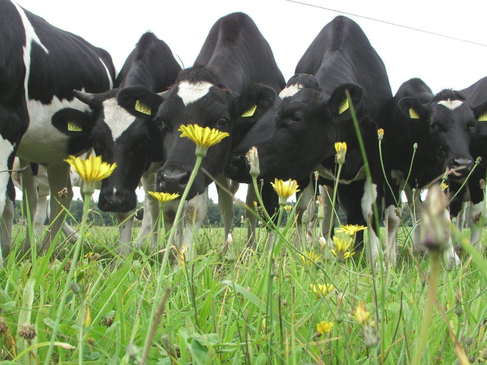 Kennisoverdracht Natuurinclusieve landbouw