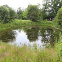 VALA geeft impuls aan verbeteren leefgebieden boomkikker en knoflookpad